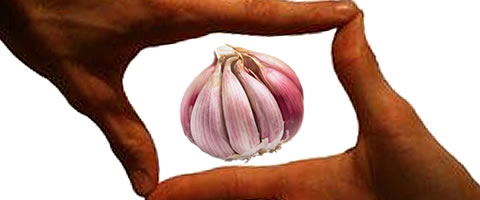Garlic in Perspective