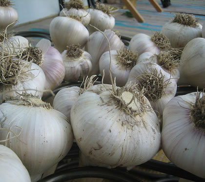 heads_of_garlic.jpg